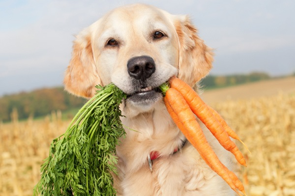 Foods That are Good for Your Dog Treat