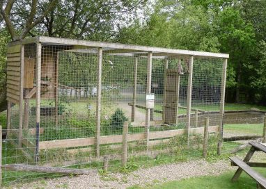 Everything You Need To Know About Aviaries