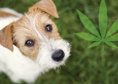 All You Need to Know about CBD for Pets