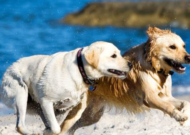 Things to Bring When Bringing Your Dog to the Beach