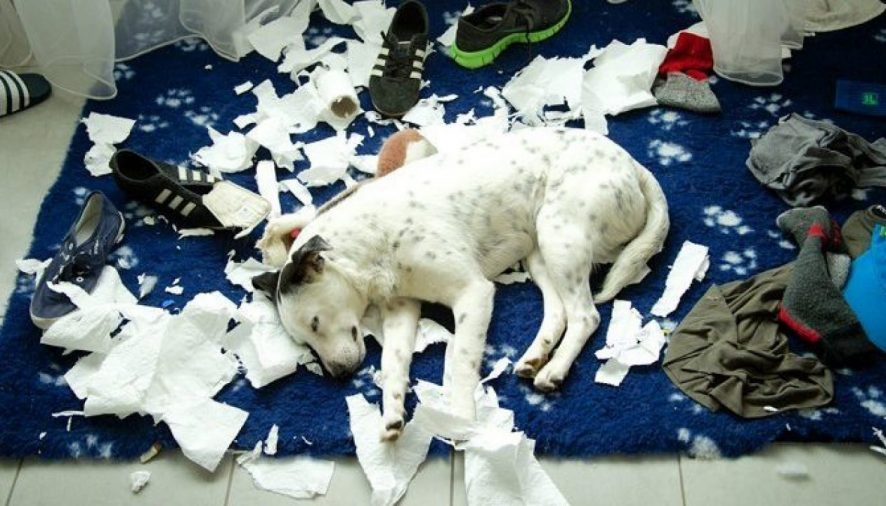 How To Stop Dogs From Shredding Paper