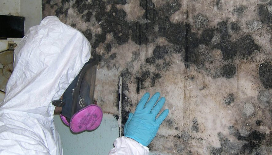 Why Do You Need An Expert To Remove Mold