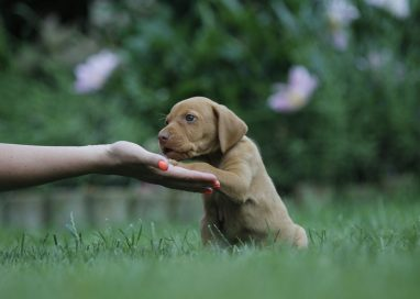 HOW TO MAKE YOUR PUP'S TRAINING EFFECTIVE AT PUPPY BOOT CAMP LOS ANGELES