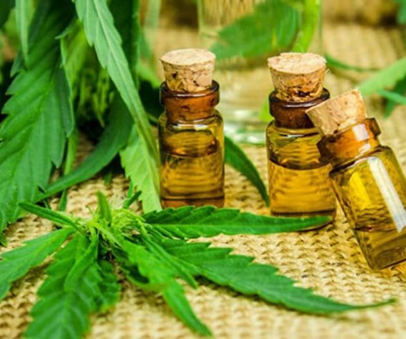 Essential Opportunities with the CBD Oil