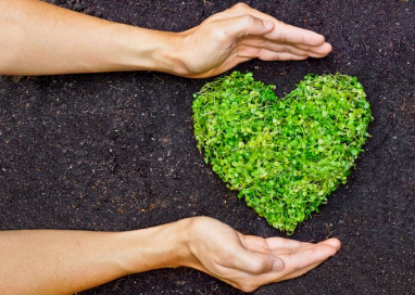 Reasons How Going Sustainable and Green Can Benefit Your Business