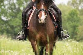 Types of Stirrups You Can Use for Horseback Riding?